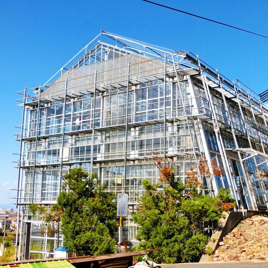 洋蘭園,泉佐野,胡蝶蘭,ガラス温室
